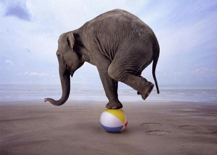 balance-elephant