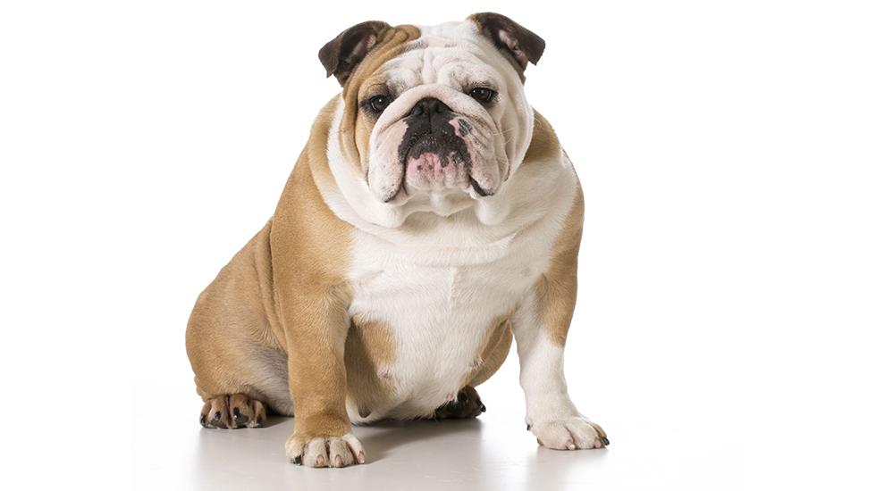 Do Female Dogs Mark Female Dog Urine Marking