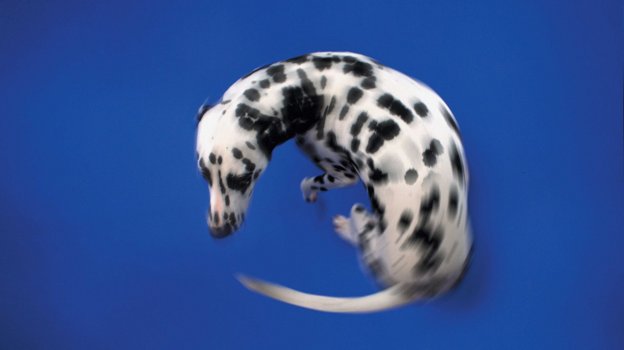 Image result for dog chasing tail picture