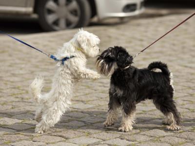 坐下来看:对于牵引皮带的狗