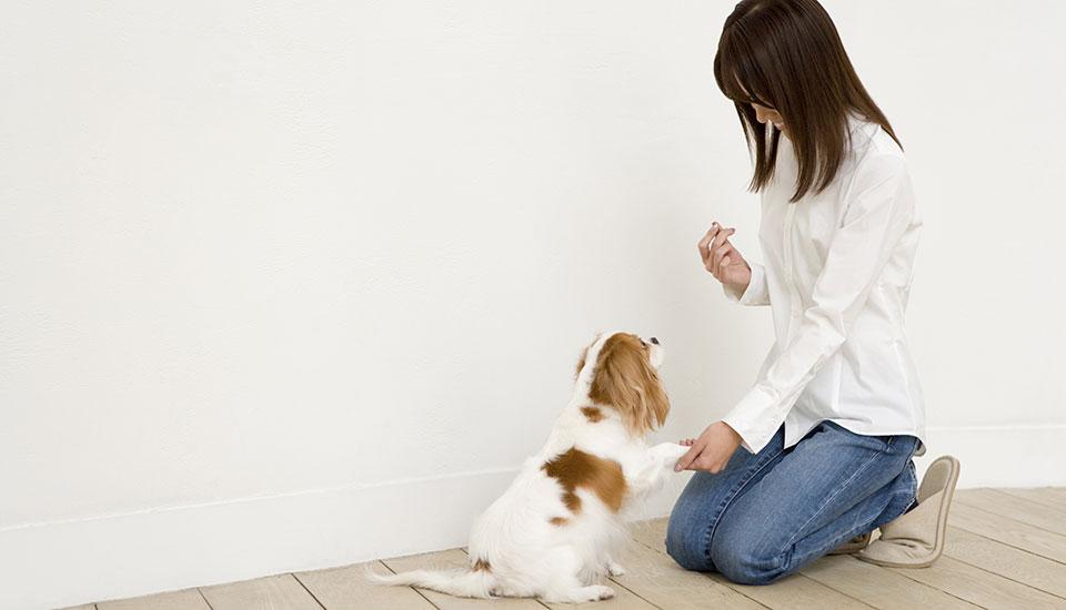 款待:狗训练的回报
