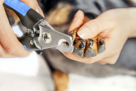 How Short Can Dogs Nail Be