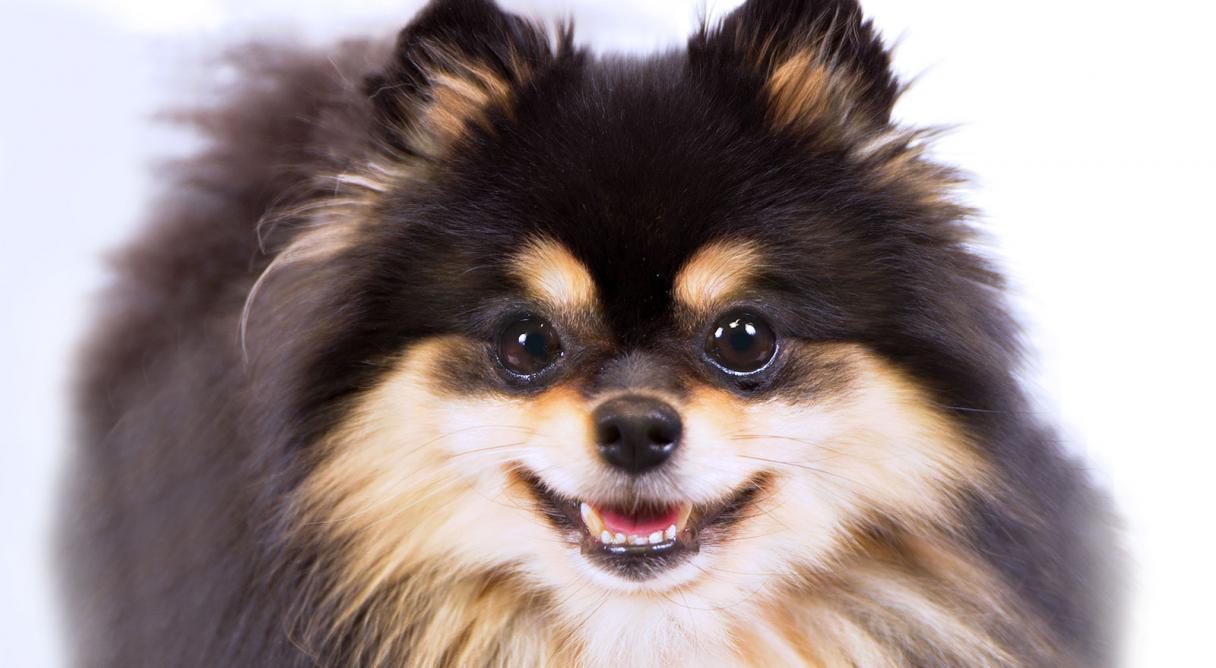 Help Me Choose A Dog Breed