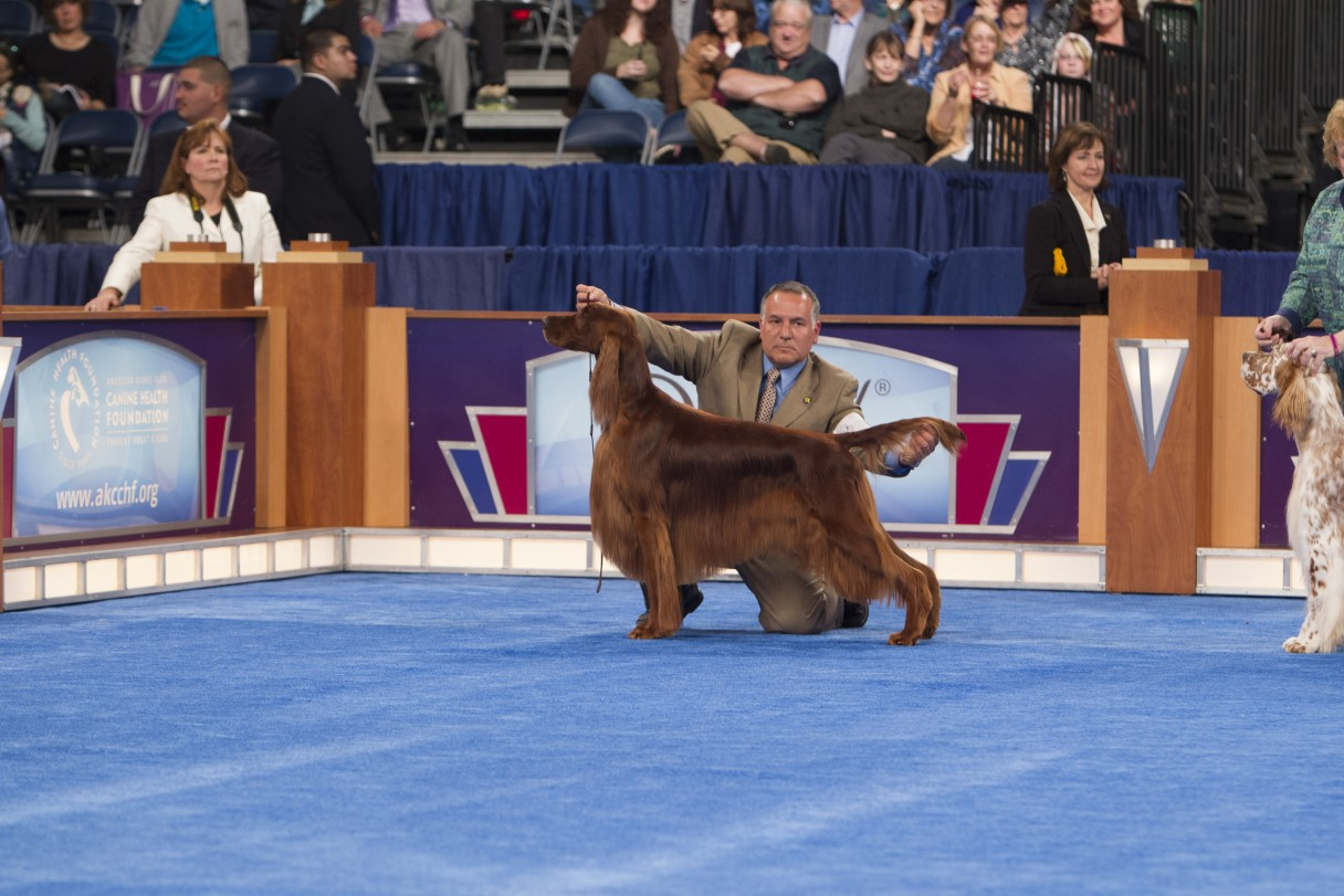 conformation frequently asked questions - american kennel club