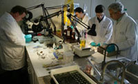 lab techs onboard the Odyssey Explorer treasure salvage ship cleaning coins