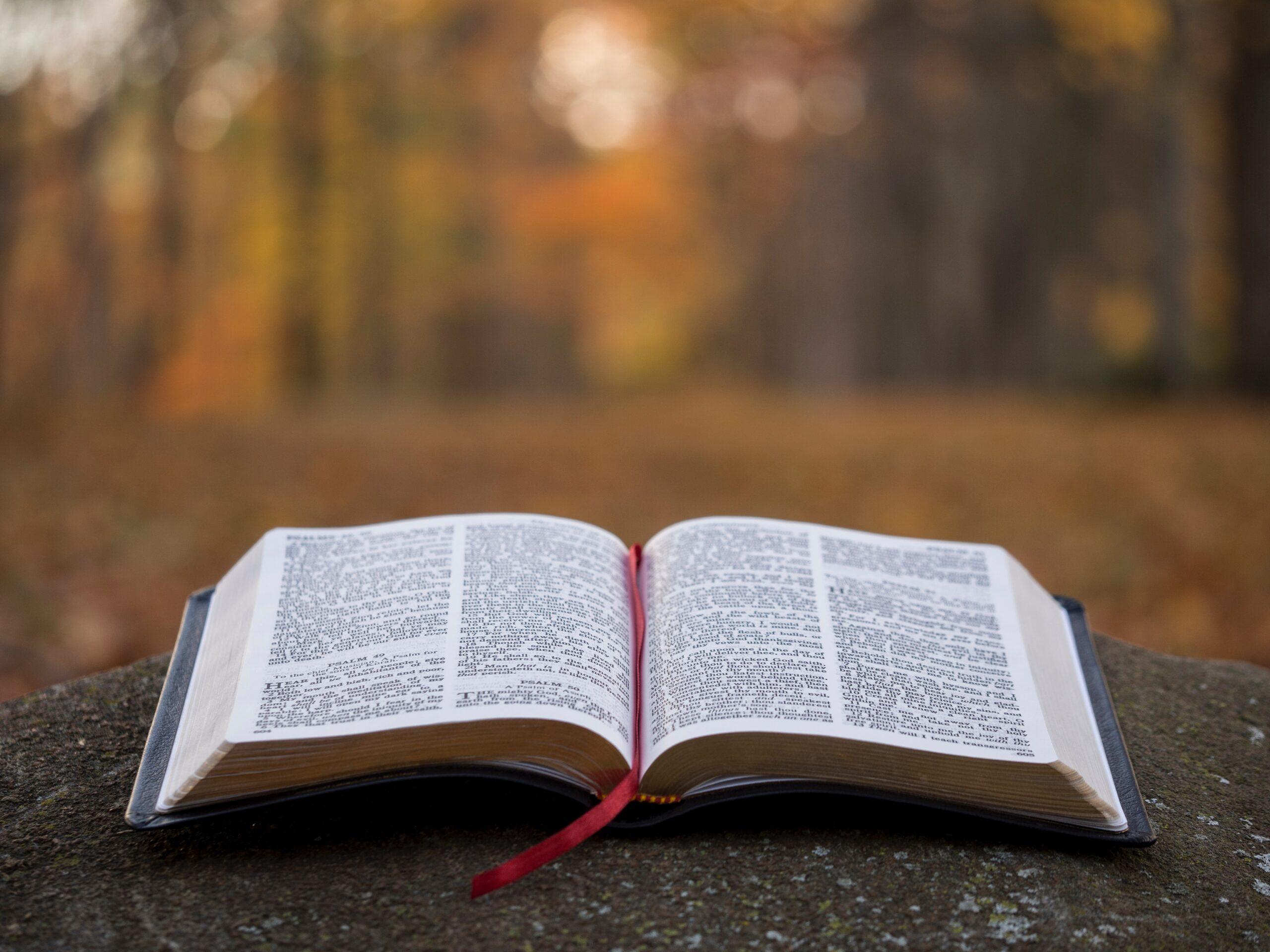 Reflexiones de Esperanza: El Arca del Pacto – Parte 9: La agenda después de la cueva (Un preludio a la adoración)