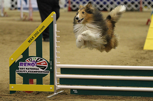 From the akc national agility championship american kennel club