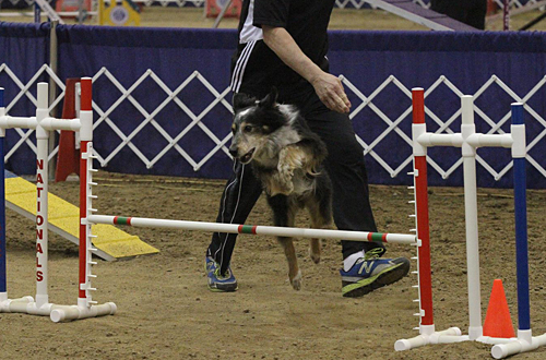 Live Stream and Photos from the AKC National Agility