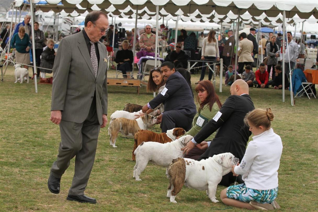 2015 fiesta cluster dog show sunday american kennel club
