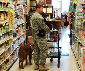 dog with army service member