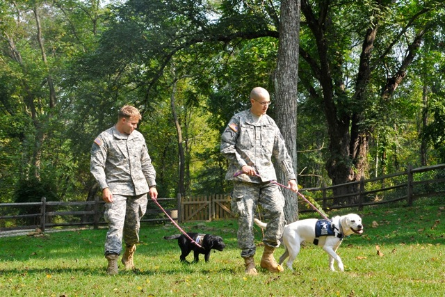 Military Service Dogs training
