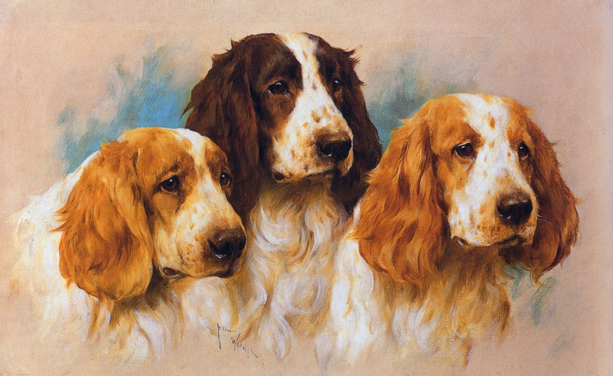 Three Springer Heads, by Arthur Wardle, RI (1864 - 1949)
