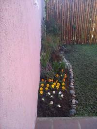 Paisajismo. diseños de jardines.  provision completa de plantas. embellecimiento gral.