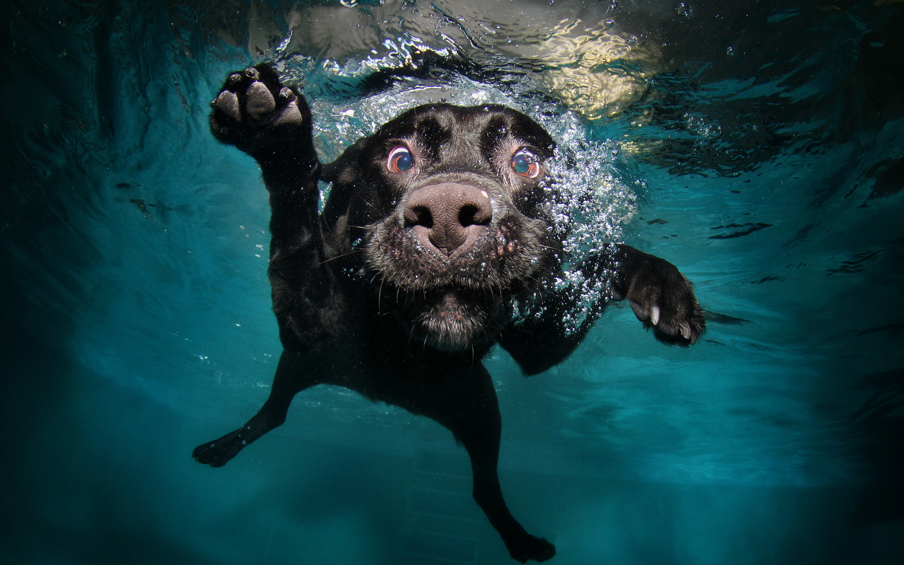 funny-dog-diving