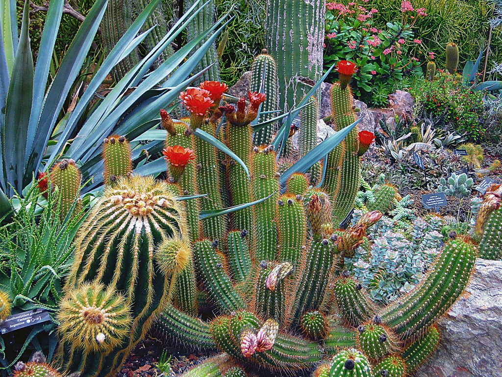 eco-friendly-gardening-botanical-cacti-cactus-256355