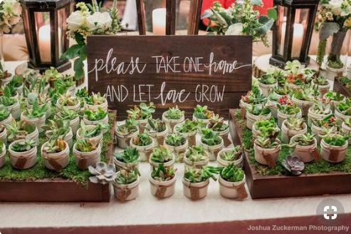 succulents-party-favors-bridal-shower