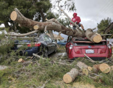 Hesperia Unified School district Maintenance and Operations Staff cut away a tree which fell on a car at Kingston Elementary School in Hesperia, Calif., on Friday Feb. 17, 2017. High winds preceded heavy rain as a winter storm blew into the High Desert. [James Quigg /The Daily Press via AP)