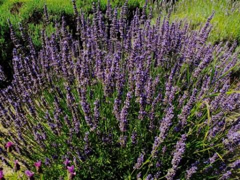 Gardening-Herbal