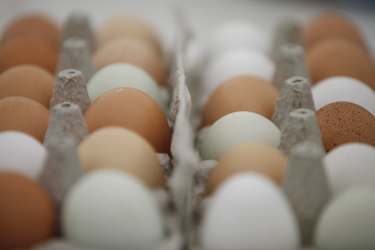 05082015_Eggs_pp_0001