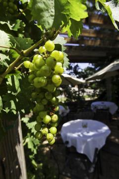 Balistreri Winery