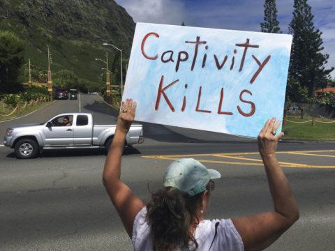 Hawaii Captive Dolphin