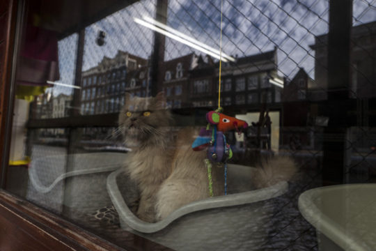 Netherlands Boat For Cats Photo Gallery