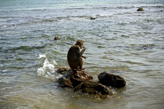 Puerto Rico Monkey Island