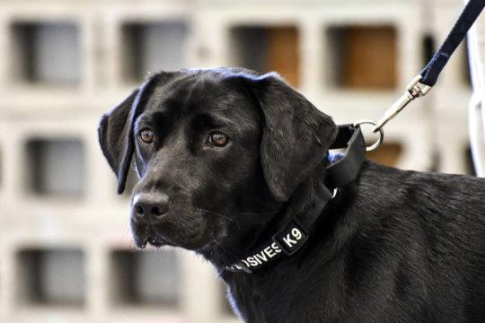 CIA Bomb Sniffing Dog