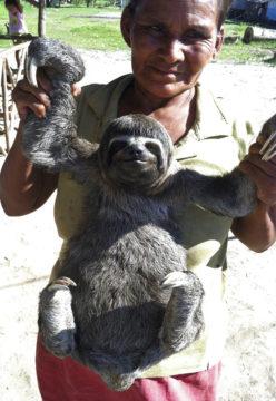 Travel Amazon Wildlife Controversey