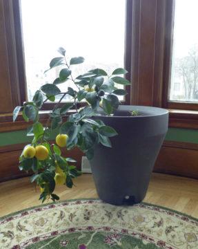 Homes Indoor Citrus