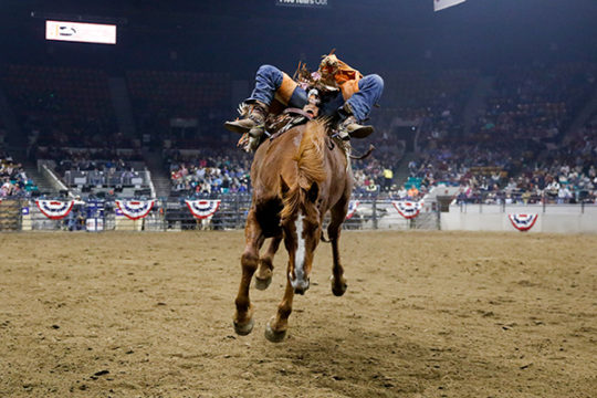 Bareback Riding event during a rodeo Jan. 12 at the 2018 National Western Stock Show.Photo by Philip B. Poston/Aurora Sentinel