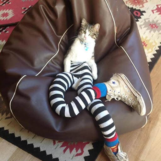 20 of the coolest cats in tights