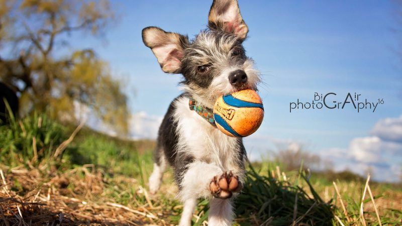 Free Photos For Select Rescue Organizations