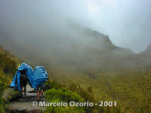Porters almost at Warmiwanusca Abra (4,200m Dead Woman's Pass)