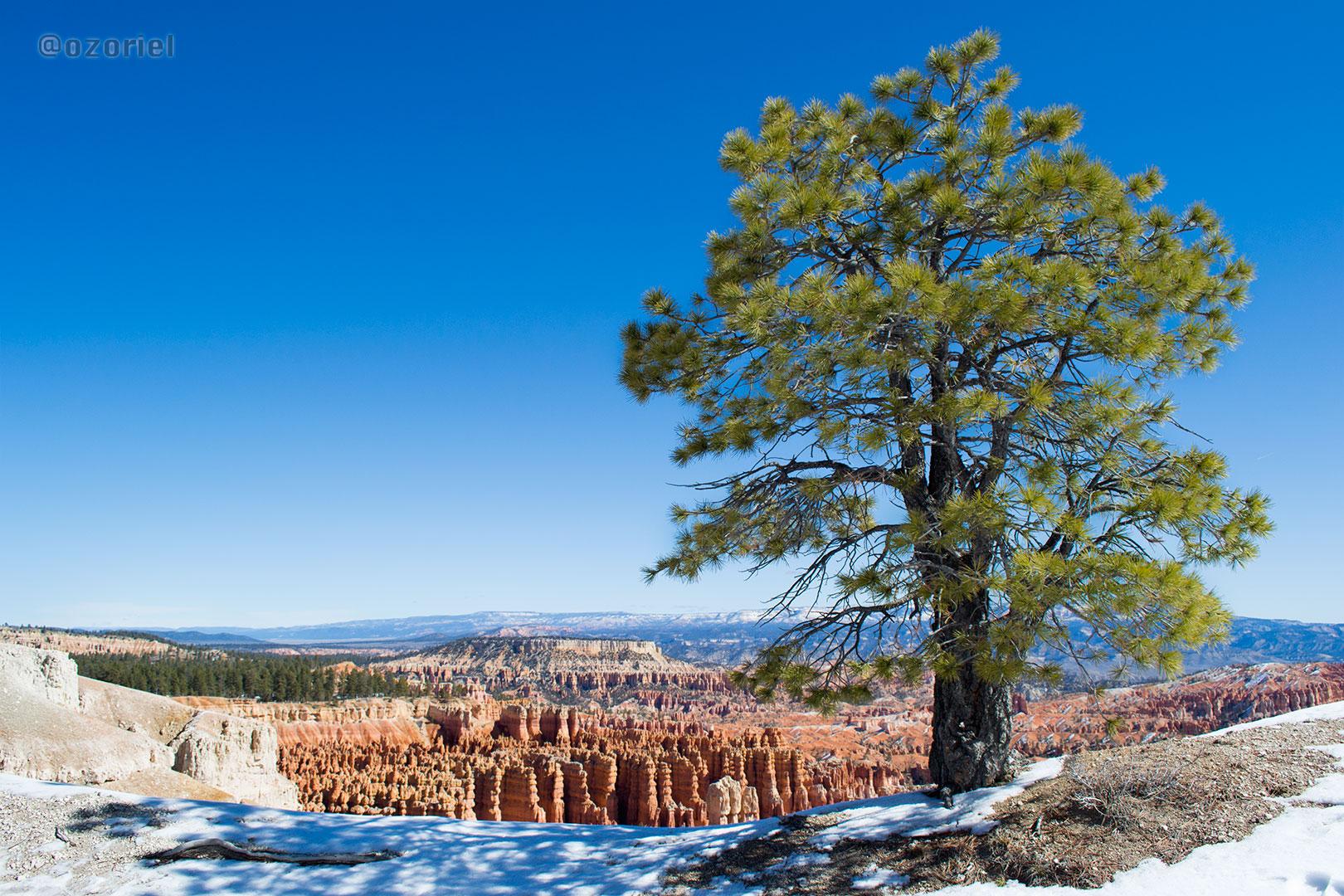 Hoodoos at Bryce Canyon National Park in Winter | Utah, USA | feb 2014