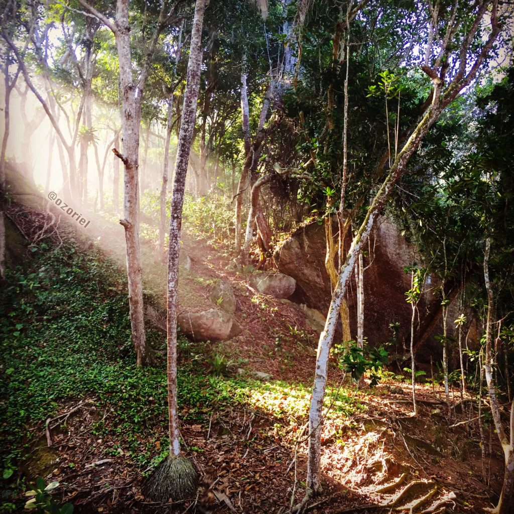 Sunlight shines brazilian tropical forest!