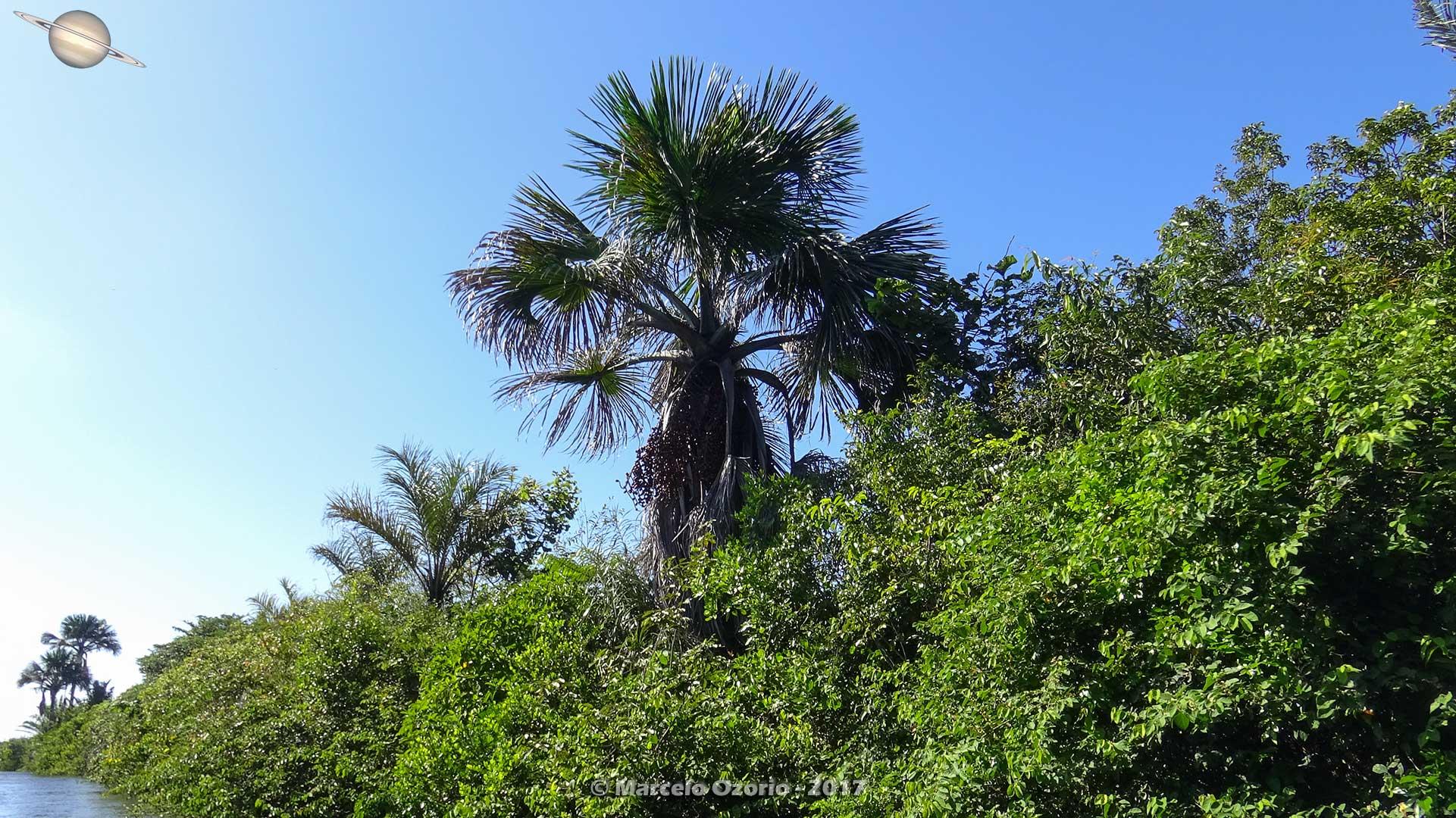 barreirinhas descendo rio preguicas atins 9 - De Barreirinhas à Canto do Atins. Trekking nos Lençóis Maranhenses - Brasil