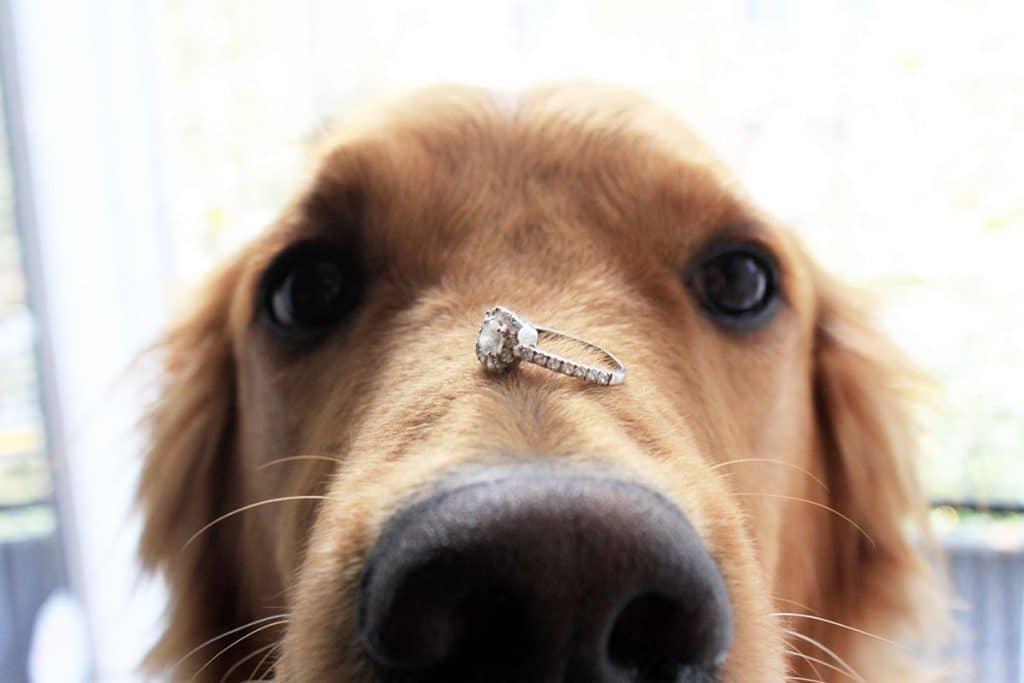 A proposta dos amantes de animais de estimação