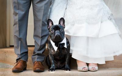 Pet no casamento de acordo com seu signo!