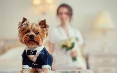 5 dicas para realizar um casamento pet friendly