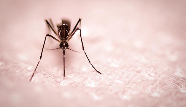 zancudo mosquito zika