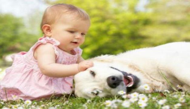 bebes mascotas (1)