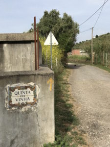 Arrow showing the way along the Camino Portuguese.