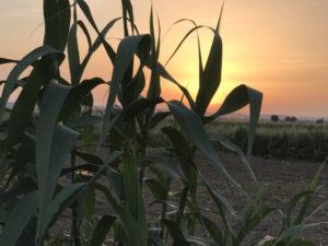 Sundown in the fields on the camino.