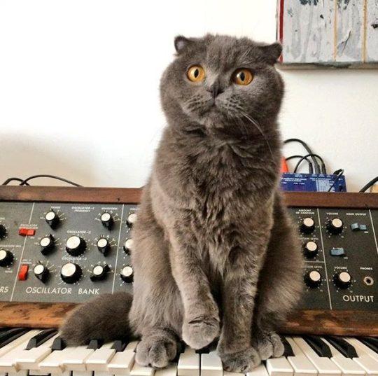 Cat and Minimoog.