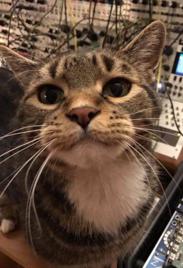 goike.com cat and modular