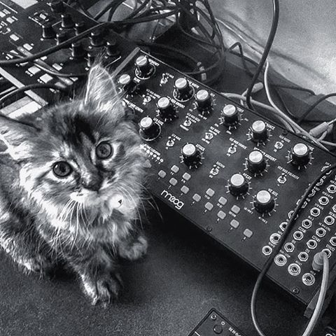 Cat and Moog Mother 32