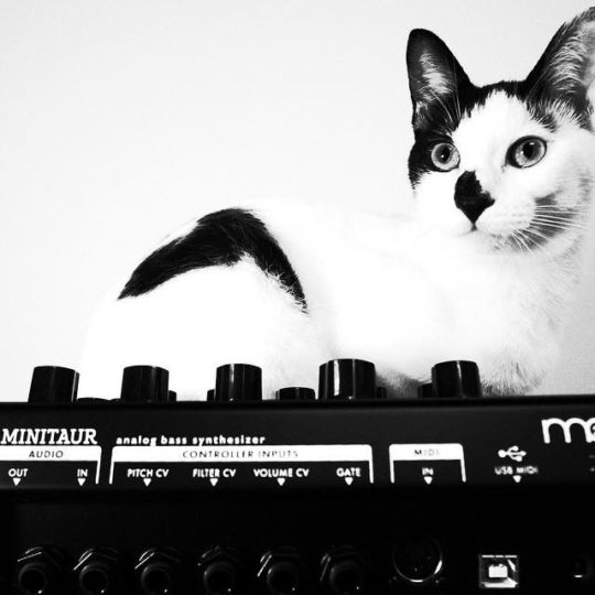 Cat and Moog Minitaur