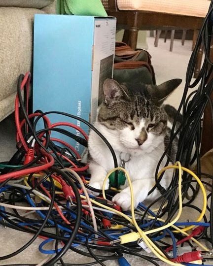 Cat and patch cords