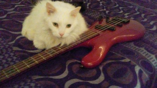 Maximus with bass